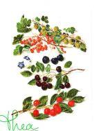 Cherries 3063 / Вишни