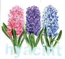 Hyacint 434 / Гиацинт