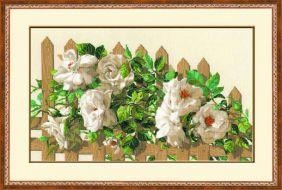 Белые розы 1059